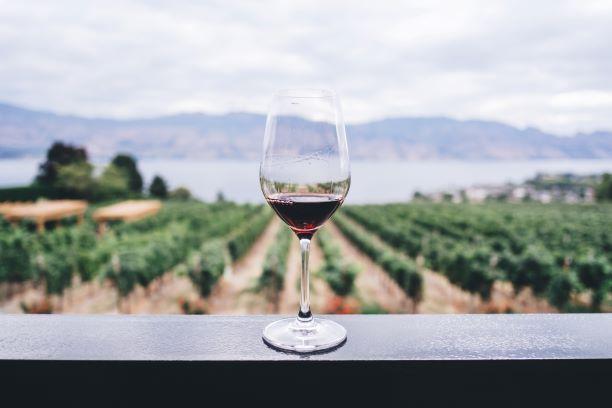 Digitalisierung in Weinberg und Weinkeller